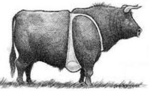 Tits on a bull